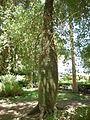 Kitchener jardin7.JPG