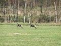 Knueppeldamm Rehe 2010-04-07 024.jpg