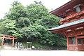 Koya Pilgrimage Routes(Nyonin-michi)4.jpg