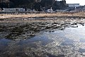 Kuji River 52.jpg