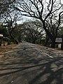 Kumarakom road.jpg