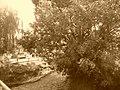 L'iton à Gravigny en été.jpg