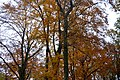 LSG Sudmerberg - Herbstwald (9).jpg