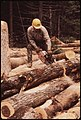 LUMBERJACK FROM TUPPER LAKE CUTTING LOGS INTO EIGHT FOOT SECTIONS FOR LOADING. HE IS WORKING ON INTERNATIONAL PAPER... - NARA - 554415.jpg