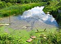 Lagoon near Holywood (8) - geograph.org.uk - 874585.jpg