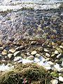 Lake Simcoe Retreat - Maryholme - Dec'10 (87) (5254866541).jpg