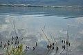 Lake Volvi GR1220009 0017.jpg