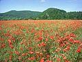 Landschaftsschutzgebiet Auenverbund Werra, WDPA ID 378407.jpg