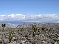 May 15: Las Vegas, Nevada is founded with auction of 110 acres.
