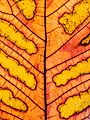 Leaf-veins-7069249.jpg