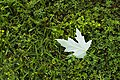 Leaf in the Grass (4566958110).jpg