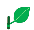 Leaf morphology attachment sheathing.png