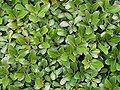 Leaves-4146.jpg