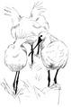 Lepelaar Platalea leucorodia Jos Zwarts 5.tif