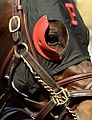 "Lexington Kentucky - Keeneland Race Track ""Race Mask"" (2145340858) (2).jpg"