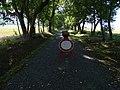Liblín, alej jižně od zámeckého parku.jpg