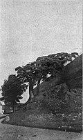 Lidzki zamak. Лідзкі замак (1910).jpg