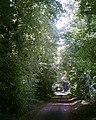Lime Avenue Spinney Lane Livermere - geograph.org.uk - 488797.jpg