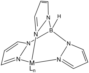 Spectator ligand - Idealized structure of a Tp ligand bound to a metal center MLn.  Tp− is a spectator ligand in this complex.