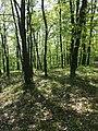 Locatelliwald westlich des Buchbergs sl3.jpg