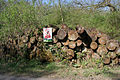 Log stack in Temple Wood - geograph.org.uk - 407519.jpg