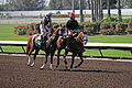 Los Alamitos Sept 2014 IMG 6767 (15317824105).jpg