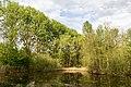 Münster, Wolbeck, Wolbecker Tiergarten, Naturwaldzelle -Teppes Viertel- -- 2014 -- 7082.jpg