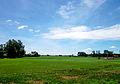 Một đồng lúa ở Hòa Lạc.jpg