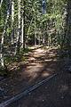 MRNP — Kautz Creek Trail (21257013323) (2).jpg