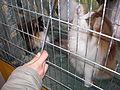 MTP Cat Show 2230055.JPG