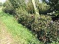 Maasheggen Extra1.jpg