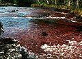 Macarena canio cristales algen.jpg