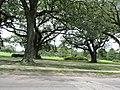 Magazine Street through Audubon Park, New Orleans, 29 June 2020 04.jpg