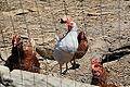 Malta - Birkirkara - Triq l-Imdina 05 ies.jpg