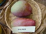 Mango Palmer Asit fs8.jpg