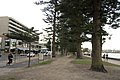 Manly NSW 2095, Australia - panoramio (29).jpg
