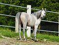 Marbach Pferd sieht sich um.jpg