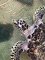 Me, a hungry turtley.jpg