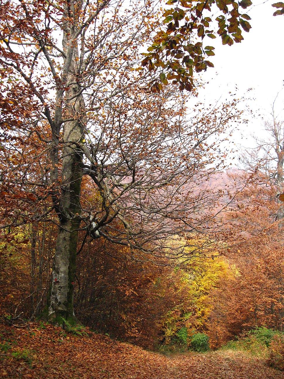 Medvednik - zapadna Srbija - Na putu ka vrhu planine Jablanik 5