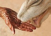 Geverfde hand bij kamelenbek