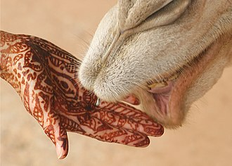 https://upload.wikimedia.org/wikipedia/commons/thumb/8/86/Mehndi_on_hand_with_camel.jpg/330px-Mehndi_on_hand_with_camel.jpg
