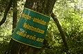 Memecylon umbellatum Kolli hills JEG3158.jpg