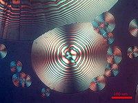 Micrografia di cristalli sferulitici di poli(idrossi butirrato) (PHB).jpg