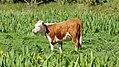 Milltown, Co. Kerry (506475) (27076424583).jpg