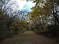 Monkey Trails, Elmhurst, IL - panoramio.jpg