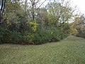 Monkey Trails-Prairie Path, Elmhurst, IL - panoramio.jpg