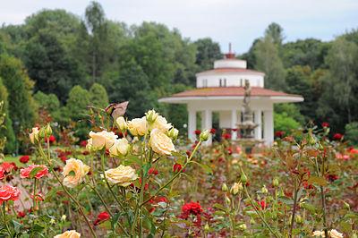 Morszyn park Lviv-166.JPG