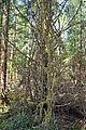 Moss-draped Tree (5108160127).jpg