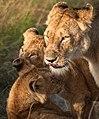 Mother (27246081294).jpg
