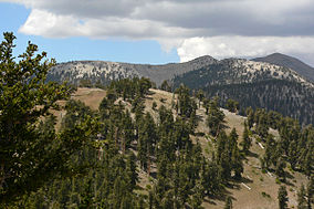 Mount Charleston South Loop ridge 4.jpg